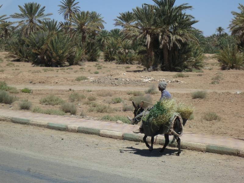 Voyage de printemps au Maroc  2014_m15