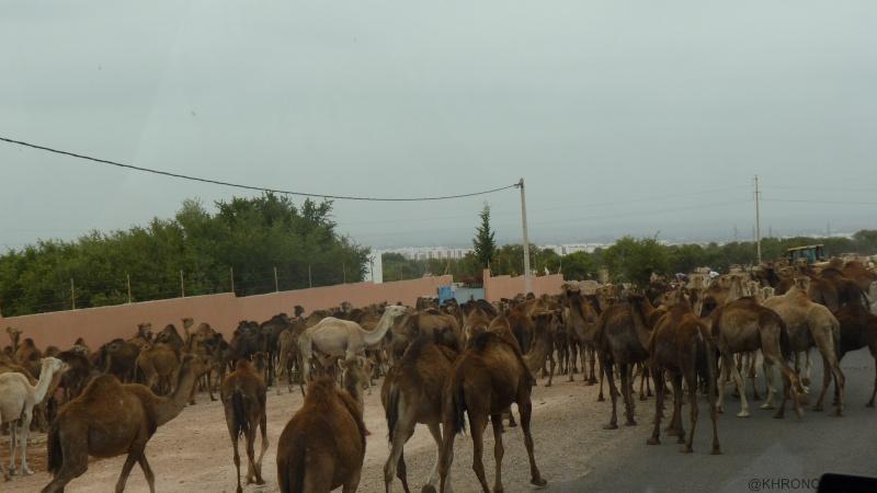 Voyage de printemps au Maroc  - Page 2 2014_m38