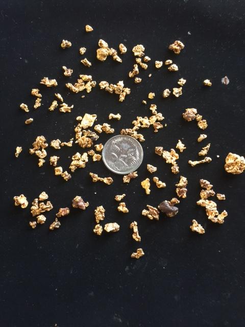 Gold Monster 1000 Img_2310