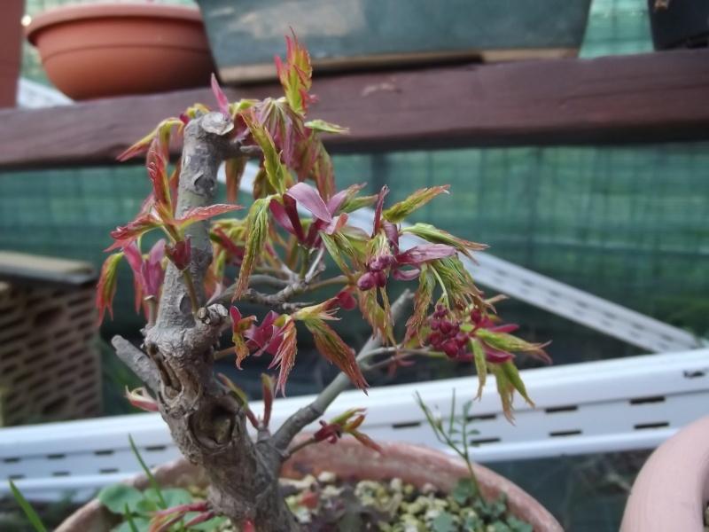 prime fioriture stagionali Dscf8510