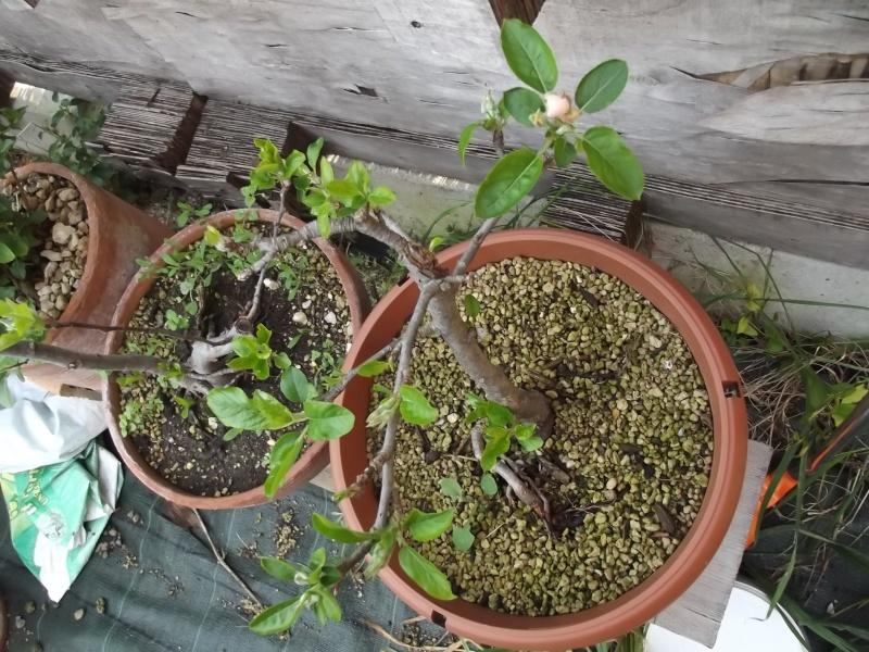 prime fioriture stagionali Melo11