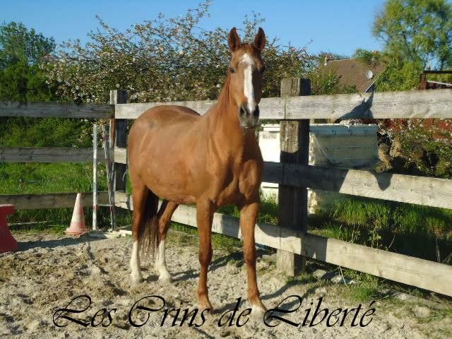 (Dpt 57) 22 ans - IVORINE - Cheval de selle - contact Mel77 Ivorin10