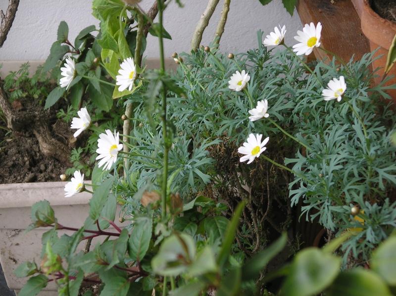 Floraisons printanières 2014 Imgp0032