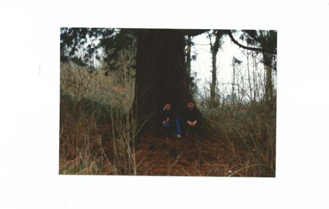 Sequoiadendron giganteum - séquoia géant Scan0016
