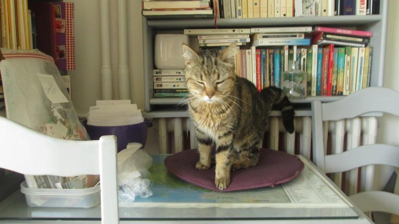 ISA, chatte européenne, marron tabby, née en 2013 Img_5610