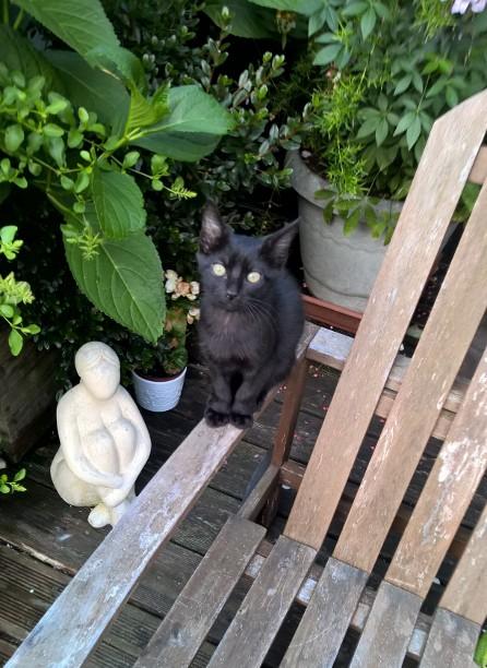 NERON, petit chaton mâle noir, né en Mars 2017 Wp_20129
