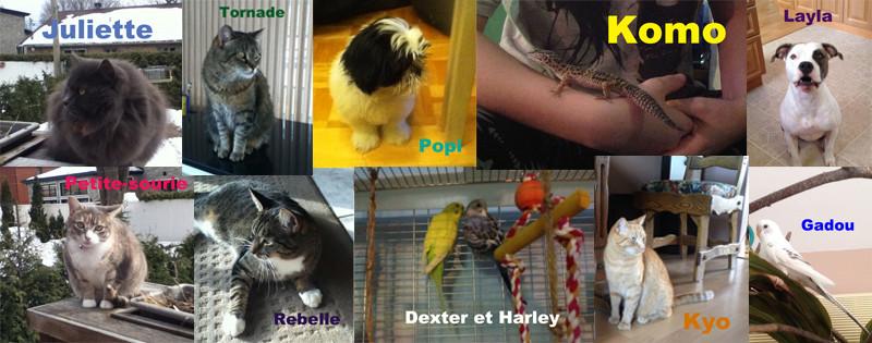Mes bébêtes ! :3  Animal10