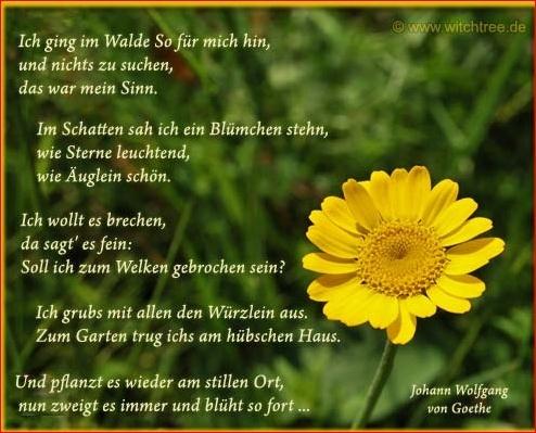 Reimversuche Blume110