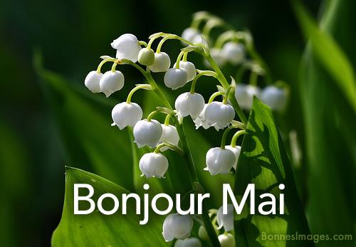 bonjour/bonsoir de Mai - Page 2 Mai_0010