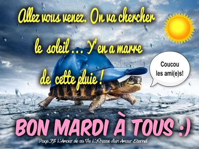 bonjour/bonsoir de Février - Page 3 Mardi_10