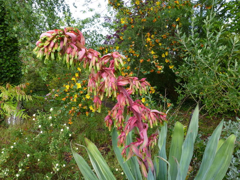 C'est le printemps dans nos jardins ! Belles associations Bescho21