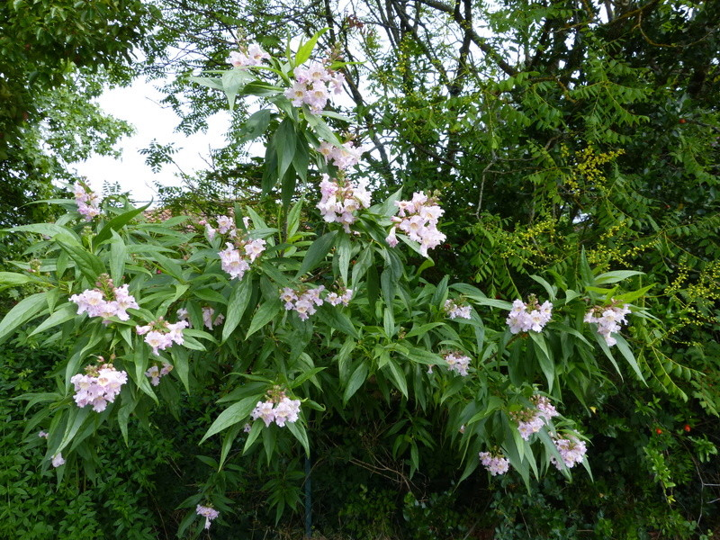 ces quelques fleurs de nos jardins - Page 3 Chital10