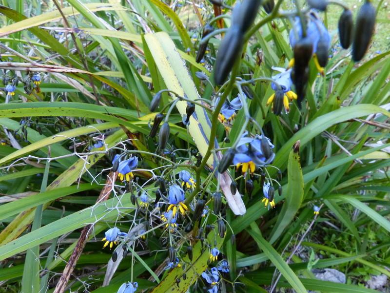 ces quelques fleurs de nos jardins Dianel10