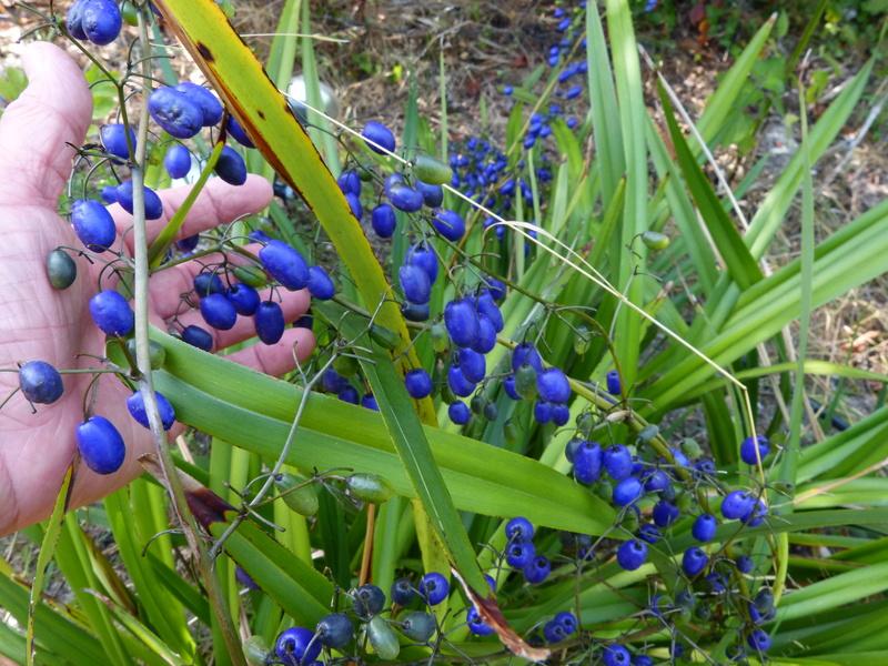 ces quelques fleurs de nos jardins Dianel11