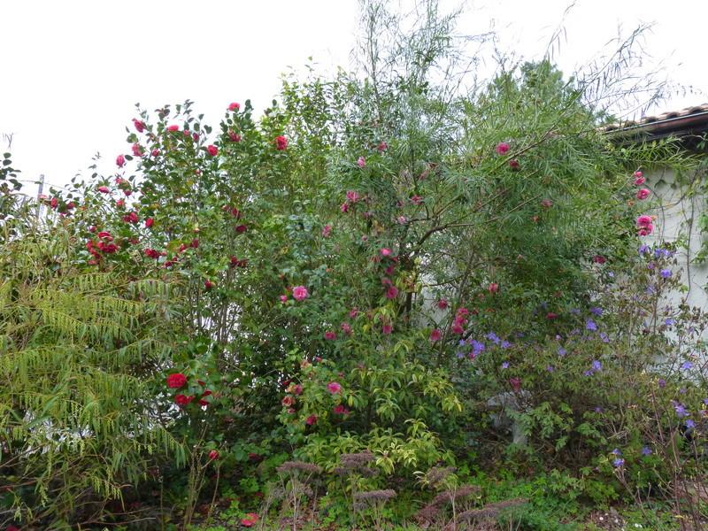 renouveau printanier au jardin - Page 4 Florai10