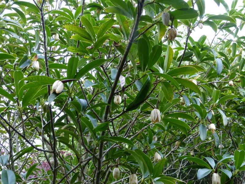 ces quelques fleurs de nos jardins Mangli13