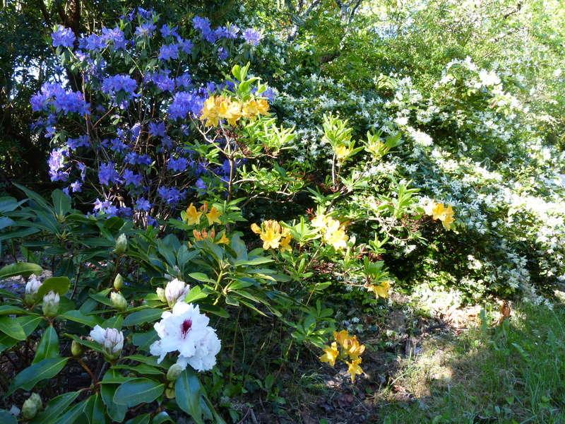 C'est le printemps dans nos jardins ! Belles associations Rhodod24