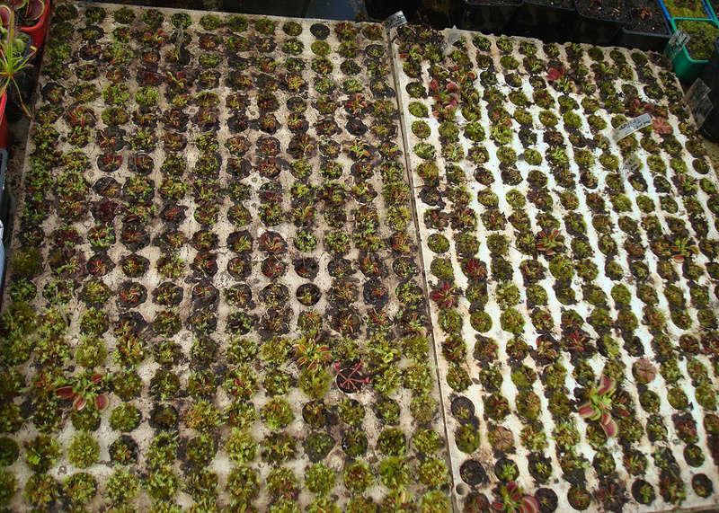 Les Plantes de Ted82 [tome 3] Dsc05412