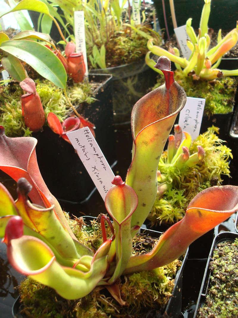 Les Plantes de Ted82 [tome 3] Dsc05420