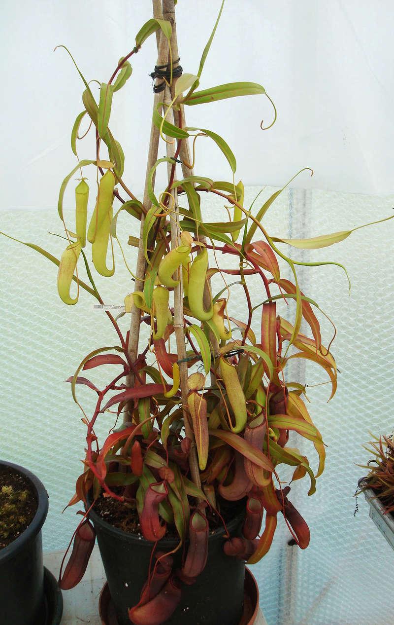 Les Plantes de Ted82 [tome 3] Dsc05423