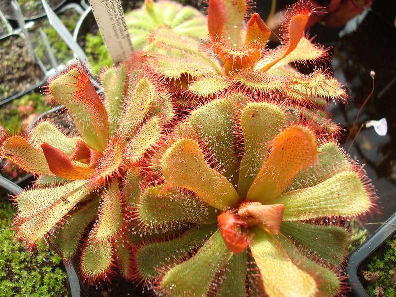 Les Plantes de Ted82 [tome 3] Dsc05427