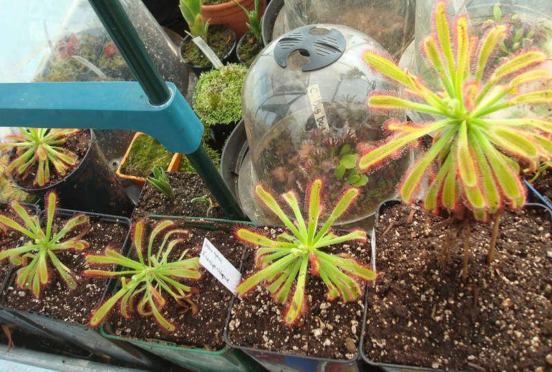 Les Plantes de Ted82 [tome 3] Dsc05428