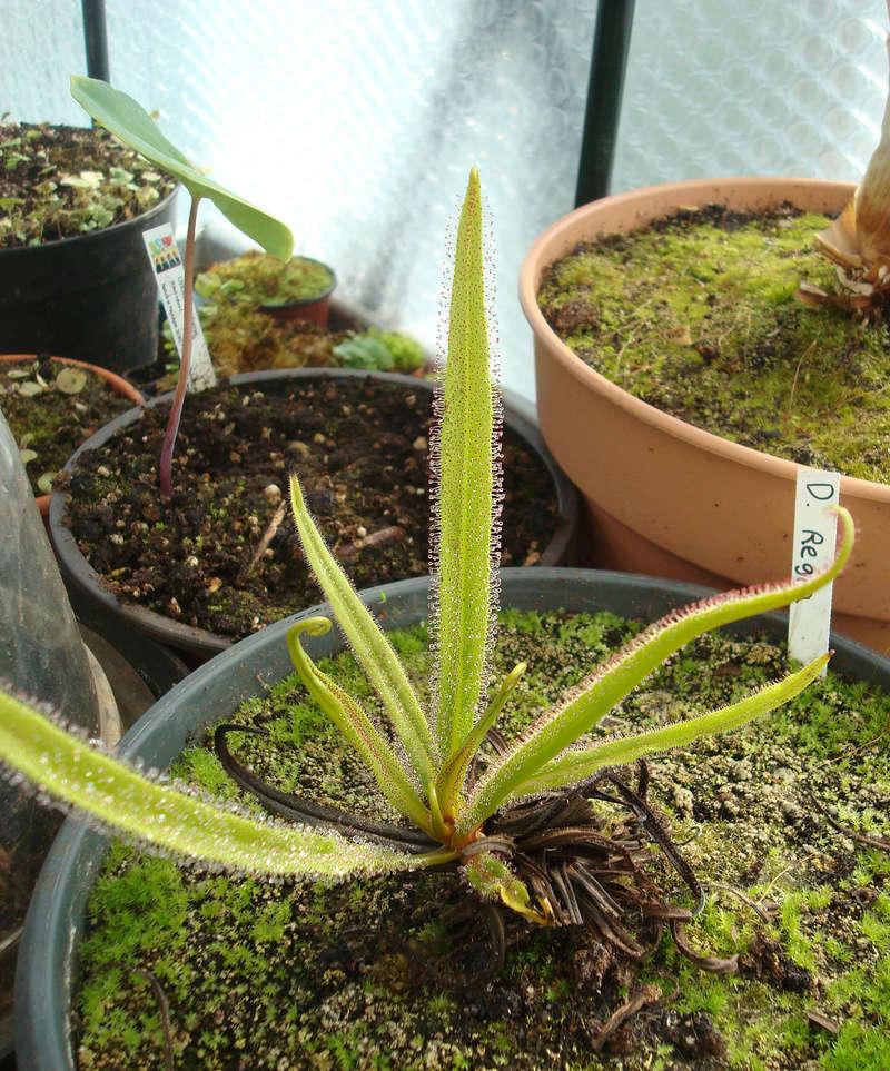 Les Plantes de Ted82 [tome 3] Dsc05431