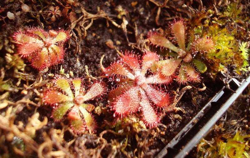 Les Plantes de Ted82 [tome 3] Dsc05514