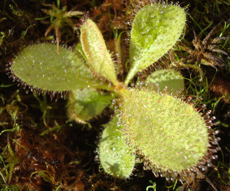 Les Plantes de Ted82 [tome 3] Dsc05515