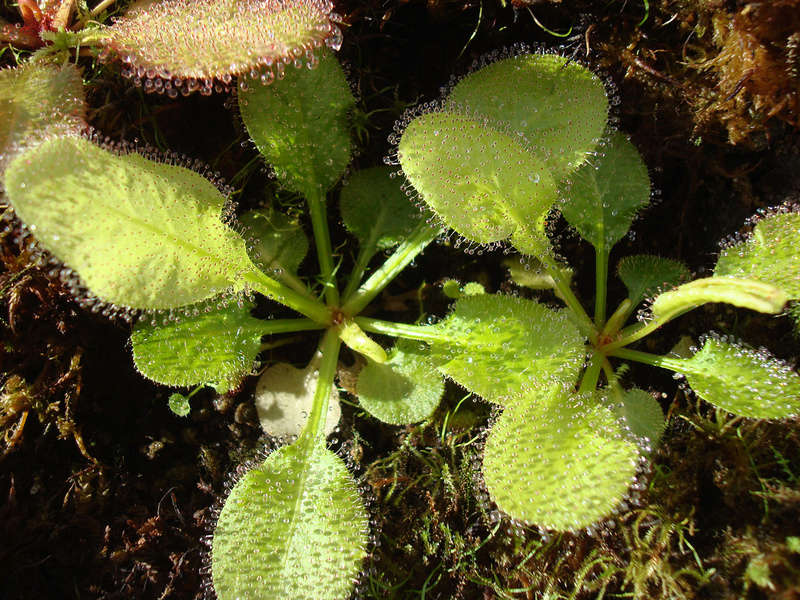 Les Plantes de Ted82 [tome 3] Dsc05516