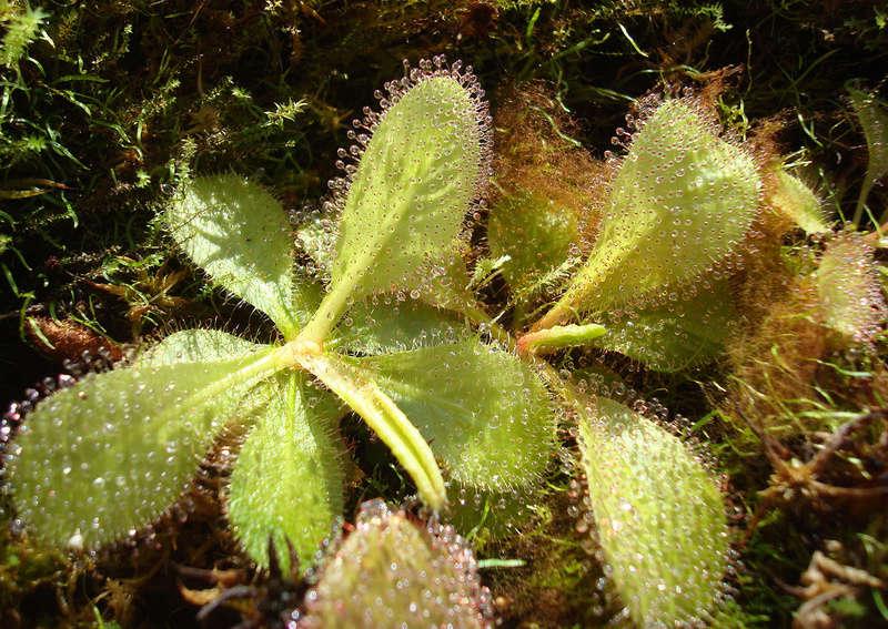 Les Plantes de Ted82 [tome 3] Dsc05519