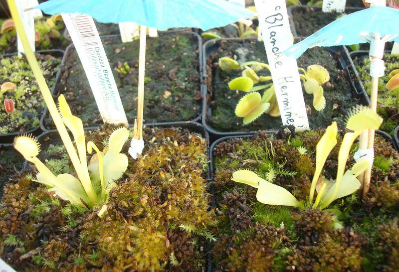 Les Plantes de Ted82 [tome 3] Dsc05810