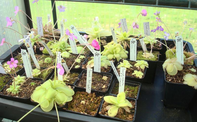 Les Plantes de Ted82 [tome 3] Dsc05817