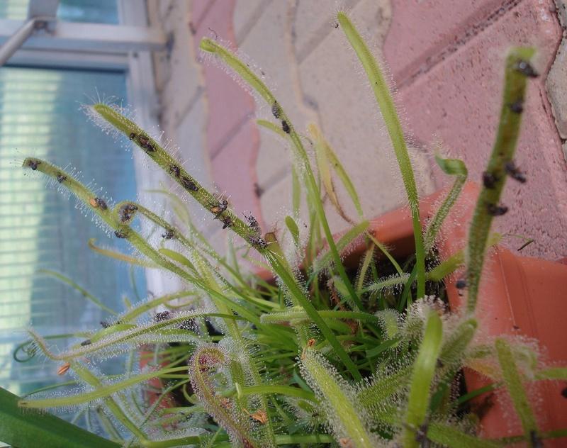 Les Plantes de Ted82 [tome 3] Dsc05820