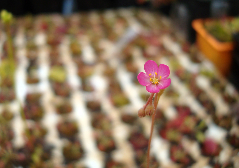 Les Plantes de Ted82 [tome 3] Dsc05843