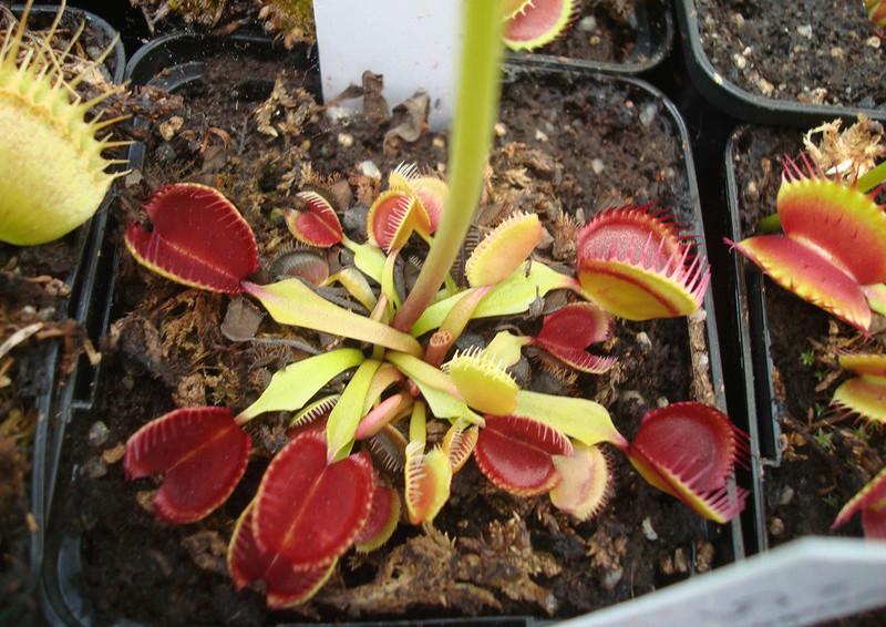 Les Plantes de Ted82 [tome 3] Dsc05920