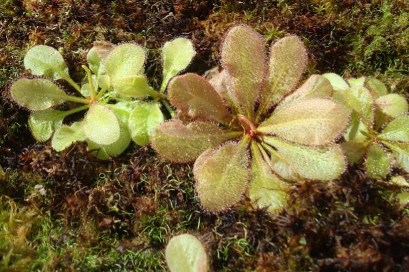 Les Plantes de Ted82 [tome 3] - Page 2 Dsc05945