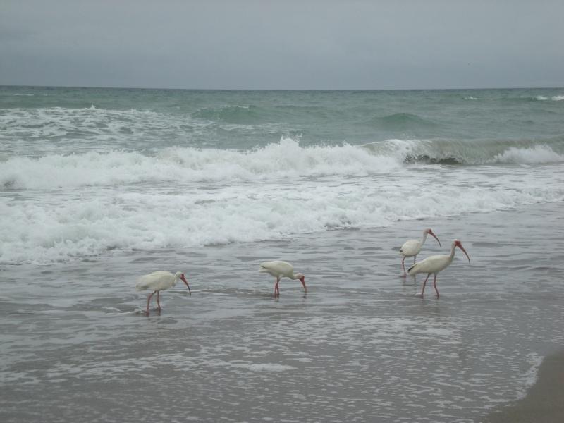 Voyage en famille en Floride - juillet 2013 - Page 2 Dscn3510