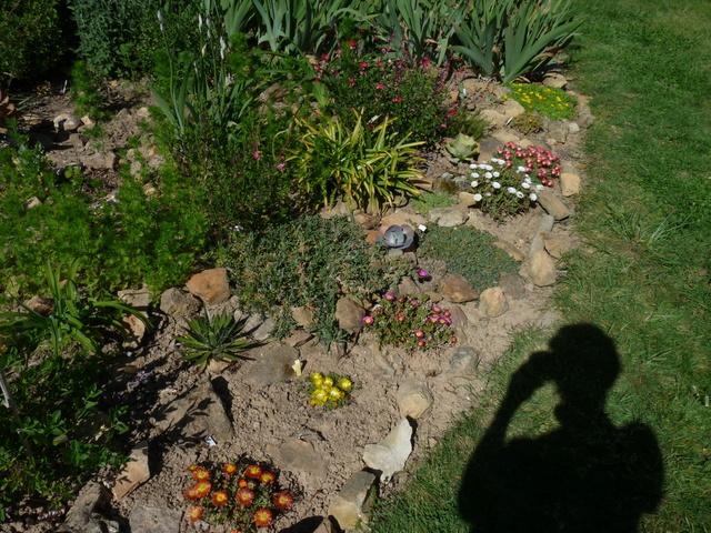 renouveau printanier au jardin - Page 4 P1030915