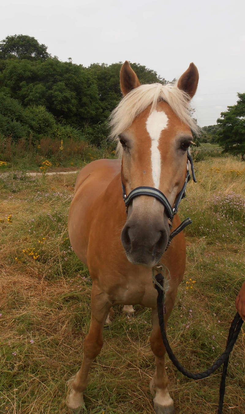 ISA ESPERANCE - poney Haflinger née en 1996 - adoptée en juillet 2017 par sonia et Olivier Isa_110