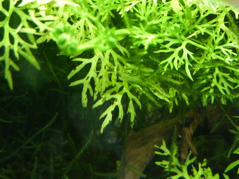 Petites taches marron sur certaines plantes P1020614