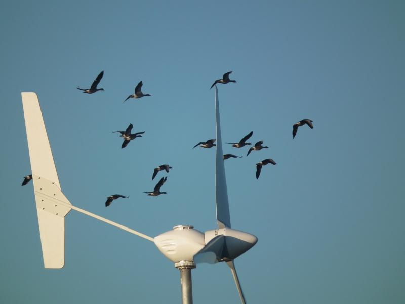 Parc éolien et chasse  Eolien10