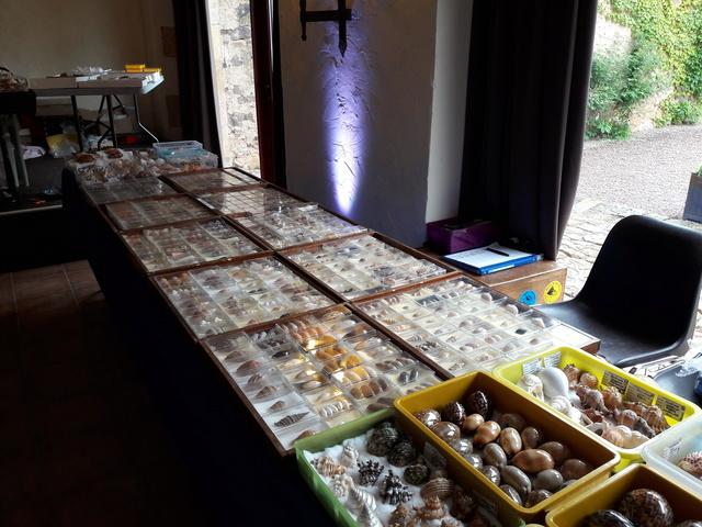 Bourse dans le château de Peufeilhoux à Vallon en Sully (03)- Les 13/14 Mai 2017 - Page 2 20170524