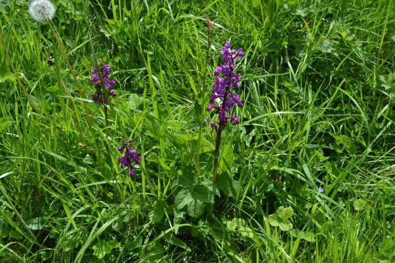 Les Orchidées de Saint-Brieuc Dsc_0012