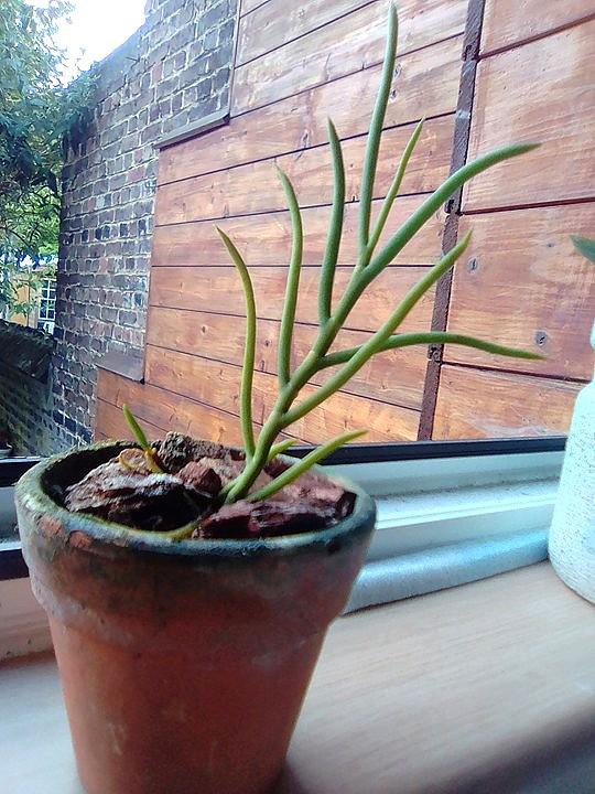Identification orchidée 18944510