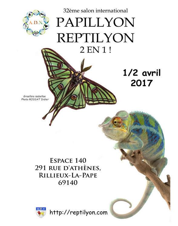 Papillyon 2017 Papill10