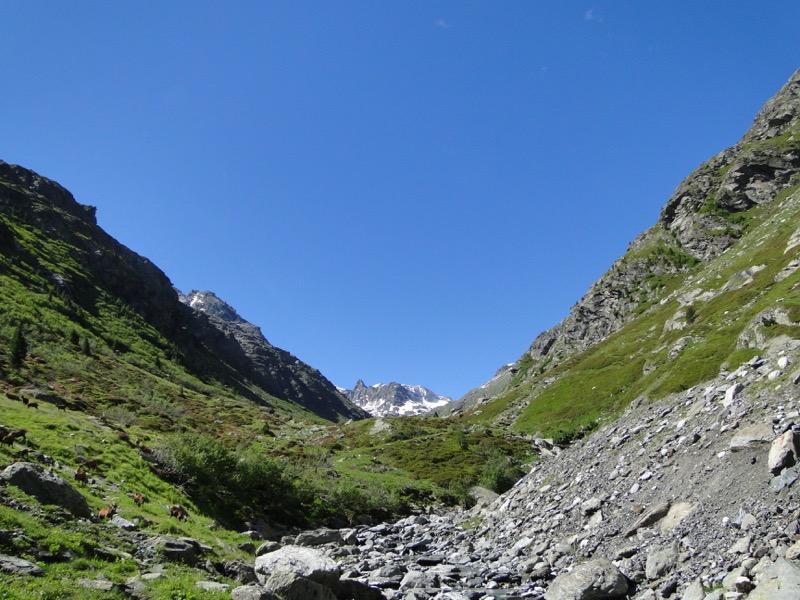 Le vallon d'Ambin Dsc04411