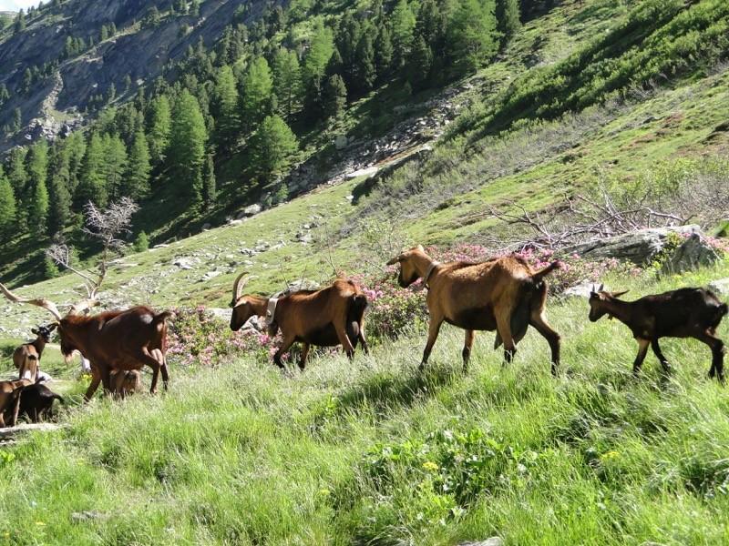 Le vallon d'Ambin Dsc04413