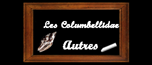 Les Columbellidae - Swainson, 1840 Columb13
