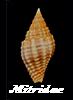 Les Coquillages Marins Essa1-13